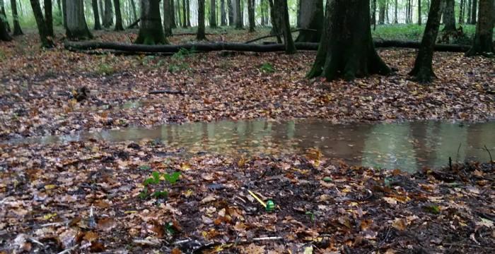 Dižskābaržu mežs pie Siščanu zivju dīķiem ar Meijas atliekām (attēla priekšplānā kreisajā pusē). Foto: © Darko Podravec